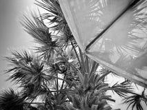Palma ed ombrello di B&w fotografia stock