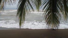 Palma em uma praia vídeos de arquivo