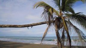Palma em uma praia video estoque