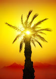 Palma en desierto Imagen de archivo libre de regalías