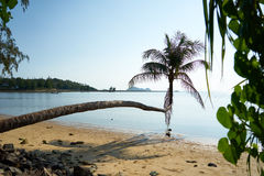 Palma en el beachf Koh Pangan fotos de archivo libres de regalías