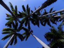Palma en el cielo azul imagenes de archivo