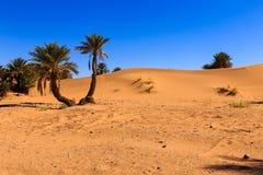 Palma en el desierto Imagenes de archivo