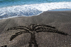 Palma en la arena Imágenes de archivo libres de regalías