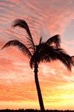 Palma en la costa imagenes de archivo