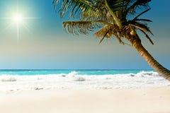 Palma en la playa Imagen de archivo libre de regalías