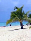 Palma en la playa Imágenes de archivo libres de regalías