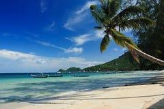 Palma en la playa imagenes de archivo