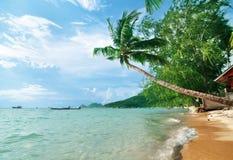 Palma en la playa Foto de archivo libre de regalías