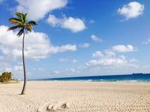 Palma en la playa Fotos de archivo