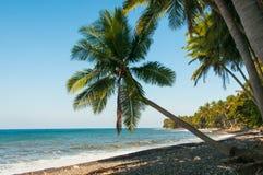Palma en la playa Bali Imágenes de archivo libres de regalías
