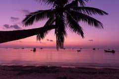 Palma en la playa con un cielo nocturno púrpura imagenes de archivo