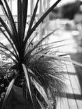 Palma en la playa Mirada art?stica en blanco y negro foto de archivo