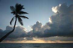 Palma en la playa, nubes de lluvia de la mañana. Imagen de archivo