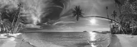 Palma en la playa tropical Foto de archivo libre de regalías