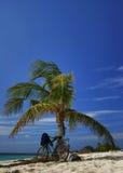Palma en la playa tropical Imagenes de archivo