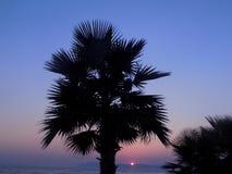 Palma en la puesta del sol cerca del mar Imagenes de archivo