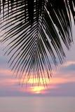 Palma en la puesta del sol por el mar Imagenes de archivo