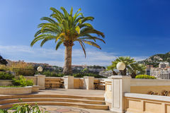 Palma en Mónaco Imagen de archivo libre de regalías