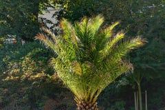 Palma en parc, allumé par le soleil de matin photos stock