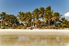 Palma en playa de la arena Imagen de archivo libre de regalías