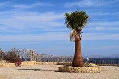 Palma en struikbloemen op een achtergrond van blauwe hemel stock foto