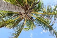 Palma en un cielo claro azul Imagenes de archivo