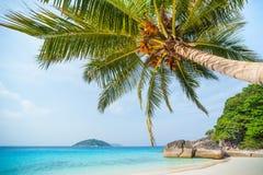Palma en una orilla de la isla de Similan imagen de archivo libre de regalías