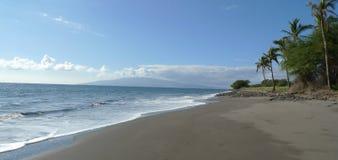 Palma en una playa Fotos de archivo libres de regalías