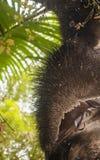 Palma espinhoso Foto de Stock