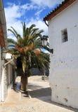 Palma floreciente en Guadalest Fotos de archivo