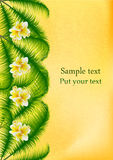 Palma-foglie con i fiori tropicali di plumeria Fotografia Stock Libera da Diritti