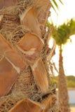 Palma, fondo di estate con il primo piano sul tronco della palma e fondo con la palma vaga, verticale fotografia stock