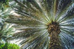 Palma fora em emirados de Dubai da cidade Fotografia de Stock Royalty Free