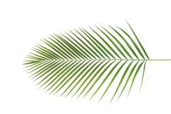 Palma, forma de hoja y textura Imagen de archivo