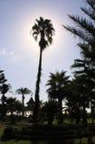 Palma in giardino con il sole dietro fotografia stock libera da diritti