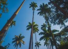 Palma grande fotos de stock royalty free