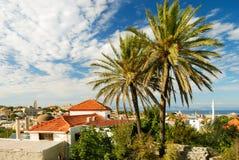 Palma grande en ciudad medieval vieja Fotografía de archivo