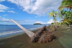Palma guasto sulla spiaggia Fotografia Stock