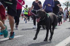Palma-Halbmarathonläufer und Haustier während des populären Rennens lizenzfreie stockbilder
