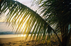 Palma havaiana imagem de stock