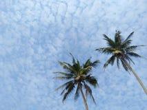 Palma hermosa con el fondo del cielo imagenes de archivo