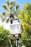 Palma i lampa obrazy royalty free