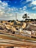Palma i lato fotografia royalty free