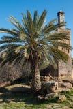 Palma i minaret w Chellah, Rabat, Maroko obraz stock