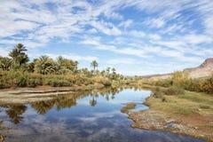 Palma i rzeka z chmurnym niebieskim niebem. Zdjęcie Royalty Free