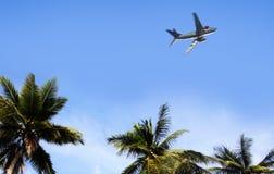 Palma i samolot Zdjęcia Royalty Free