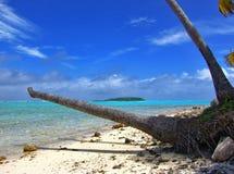Palma inoperante Foto de Stock