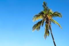 Palma isolata sopra un cielo blu Fotografie Stock Libere da Diritti