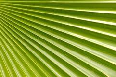 palma kokosowa liści, Obraz Royalty Free